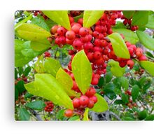 Red Holly Berries Canvas Print