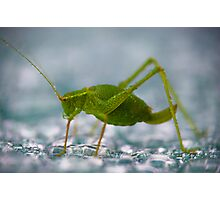 Lazy Cricket Photographic Print