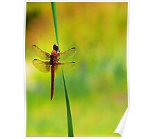 Dragonfly ~The  Beauty From With In Poster