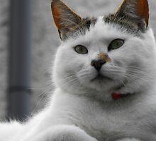 Kipling the Cat by delaol