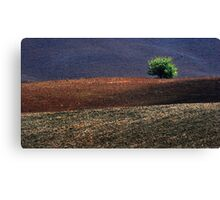 Flag of Tuscany Canvas Print