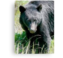 Did Someone Say Cheese  Canvas Print