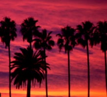 A Frame of Hollywood Sunsets. Sticker