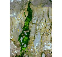 Mossy Crevice Photographic Print