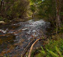 Along the Stitt River by Shane Viper