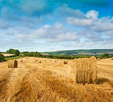 Rolling Sussex Downs: England by DonDavisUK