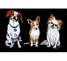 Dogs - Man's Best Friends Photographic Print