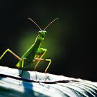 Praying mantis frightening by mrLEV