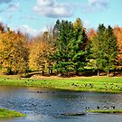 Geese Sanctuary by Deborah  Benoit