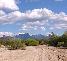 Desert Road by CynLynn
