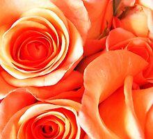 Orange Roses by Terri-Leigh Stockdale