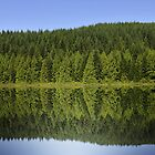 Natures Reflection by freelancebob