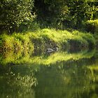 Green Reflection by freelancebob