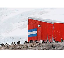 Gentoo colony at abandoned Argentine station Photographic Print