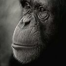 Darwinian by oracle0017