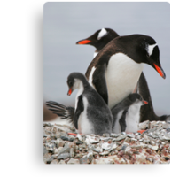 Gentoo with 2 healthy chicks Canvas Print