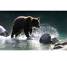 Grizzly Crossing Photographic Print