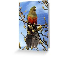 King Parrot in Magnolia Tree #2 Greeting Card