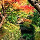 Fall colours by Fernando Rosenberg