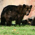 Grizzly Sibblings by Lisa G. Putman