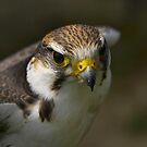 Beak by citrineblue