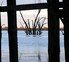 Barmera South Australia by Robyn Jolly