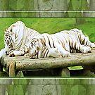 whitetigers by cynthiab
