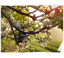 Berries and blossoms Poster