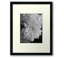 White Bloom (Balck And White) Framed Print