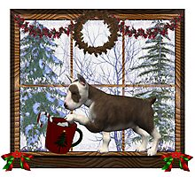 December Puppy .. a christmas tale Photographic Print