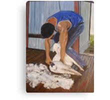 Shearing at Bookham, NSW Canvas Print