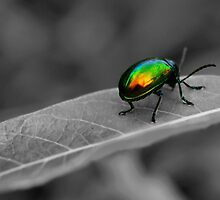 Colorful Bug by Gaby Swanson