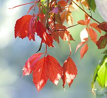 Autumnal Contrasts by Karen Boyd