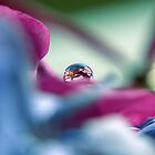 A Drop of colour by Karen Boyd