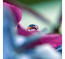 A Drop of colour Photographic Print