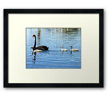 Black Swan with Cygnets Framed Print