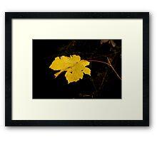 Single Golden Leaf Framed Print