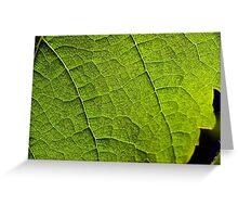 back lit vineyard leaves Greeting Card