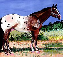 Appaloosa Horse Portrait by Oldetimemercan