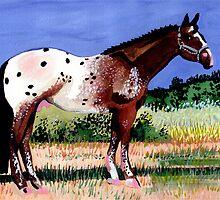 Appaloosa Horse Portrait by Oldetimemercan