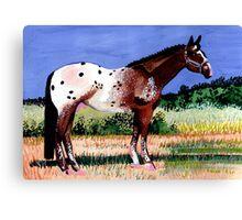 Appaloosa Horse Portrait Canvas Print