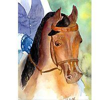 Arabian Saddleseat Horse Portrait Photographic Print