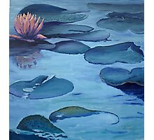 Water Lily in Moonlight Photographic Print