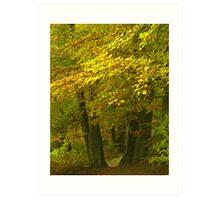 Old beech trees Art Print