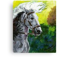 Spanish Barb Horse Portrait Canvas Print