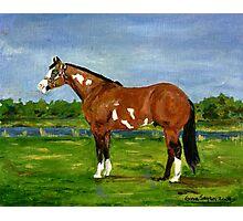 Paint Halter Horse Portrait Photographic Print