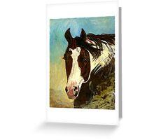 Paint Halter Horse Headshot Portrait Greeting Card