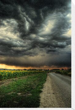 Sunflowers and Thunderstorms by John  De Bord Photography