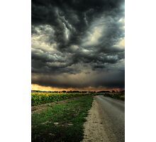 Sunflowers and Thunderstorms Photographic Print