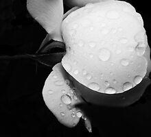 Simplicity by Jess Mo